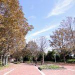 初心者が色づく秋を写真に撮ってみた とちぎわんぱく公園編